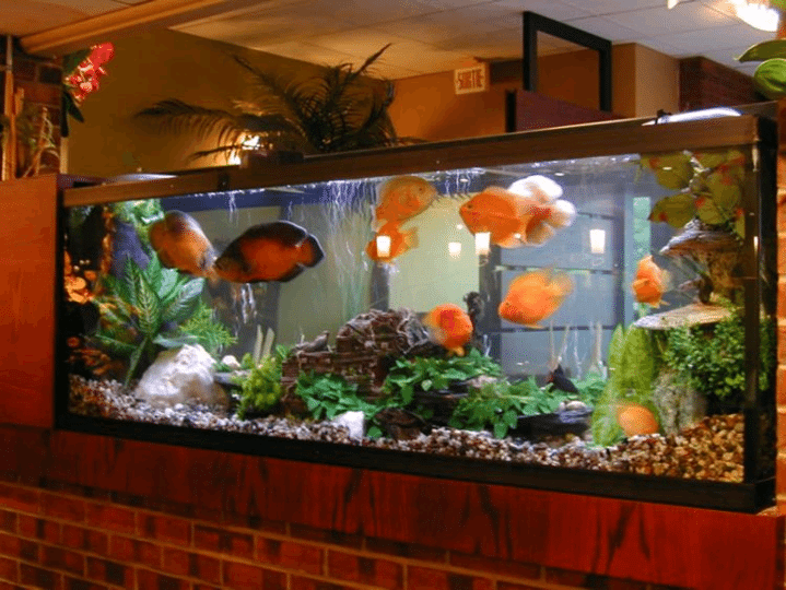 Simple Vastu Tips For Keeping An Aquarium In Your Home
